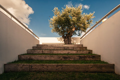 house in Azeito, Portugal (Antnio Alfarroba) Tags: old house project casa steps velha architect lone rvore projecto olivetree s oliveira arquiteto degraus arquitecto ngulo antnioalfarroba solipas