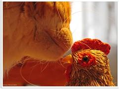 """""""Ich wollt, ich wär ein Huhn!"""" - """"I wish, I were a chicken!"""""""