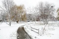 Snow-7997
