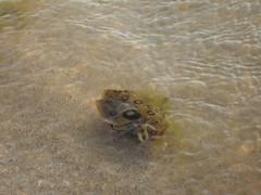 Aguamala (camilavitrei) Tags: ocean aguamala