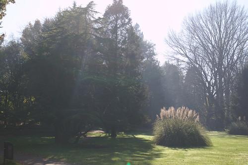 Jardín Botánico Universidad Austral, Isla Teja, Valdivia.