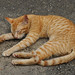 Dambulla - Sleeping Stray