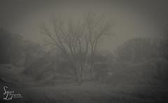 Loneliest Number (1 of 1) (amndcook) Tags: bw blackwhite lakemichigan landscape michigan outdoors sand shoreline tree amandacook dunes earlyspring february montague nature photograph spiritledphotography wildlife winter