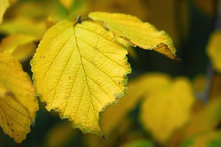 Jaune tout simplement. / Yellow simply.