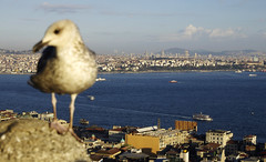 At the top of Galata tower (Gregor  Samsa) Tags: city sea bird tower turkey town view istanbul vista overlook viewpoint galata goldenhorn kulesi galatatower galatakulesi seuagull