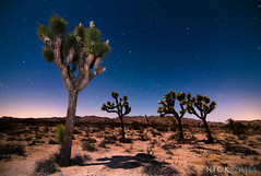 Moonlit Joshuas (Nick Chill Photography) Tags: california moon night stars photography nationalpark nikon fineart joshuatree workshop stockimage d300s nickchill
