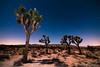 Moonlit Joshuas (Nick Chill Photography) Tags: california moon night stars photography nationalpark nikon fineart joshuatree workshop stockimage d300s nickchill