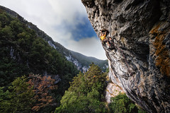 Secret of the Fyfe (Regan McCaffery) Tags: trees newzealand fog clouds forest landscape olympus limestone rockclimbing omd em5 micro43 lumixgvario714f40 fyferivergorge troymattingley