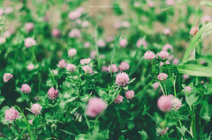 May (Strawberry Mood) Tags: life plant flower tree green nature cherry holding mood hand purple blossom bokeh pastel air lifestyle fresh lilac bloom freshness strawberrymood strawberrymoodcom