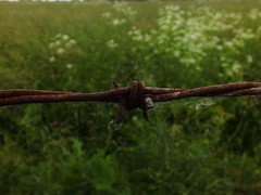 Barbed Wire (ja_kuzie203) Tags: nature closeup fence rusty barbedwire greenery