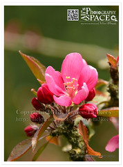 Reddish Pink Flower ({ahradwani.com} Hawee Ta3kees-هاوي تعكيس) Tags: uk flowers green london nikon europe images ali sample hassan essex علي ingatestone 2013 18300mm d7100 هاوي flowerwatcher london2013 hawee nikon18300mm haweeta3kees هاويتعكيس تعكيس ta3kees nikond7100 ahradwanicom ahradwani nikon18300lens nikkorafsdx18300mmf3556gedvr nikond7100sampleimages