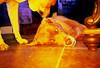 (K e v i n) Tags: film home analog 35mm lca lomography lomolca colorsplashflash molly xavi fujichromevelvia50 expiredoctober2009