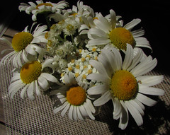 Margrietjes (Pictoscribe) Tags: flowers wild daisies weed yarrow common pearly everlasting pictoscribe