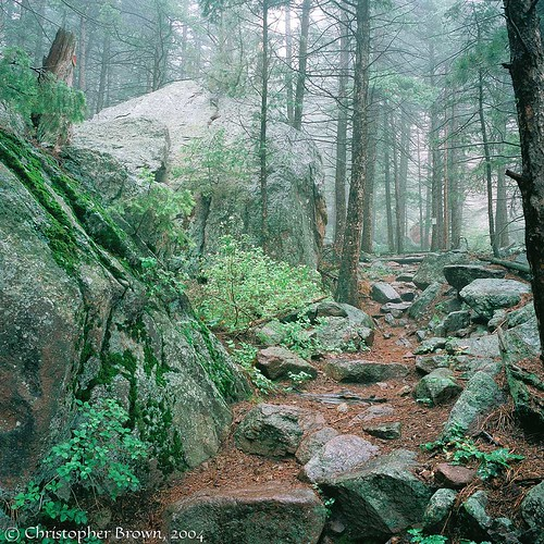 Photo - Misty forest trail in the foothills of OSMP.