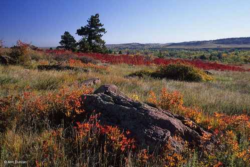Photo - Fall colors on the prairie near South Mesa trailhead.