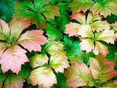 """Metalic"" Leaves (PuffinArt) Tags: colour folhas leaves digital shiny bright puffinart filters blending vandamalvig metallike"