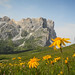 Dolomites blooming meadows