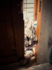 () Tags: cat cut taiwan olympus tainan  omd   em5