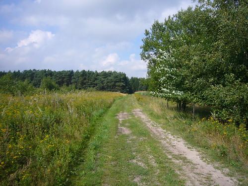 Nartum - sonniger Weg am Röhrberg