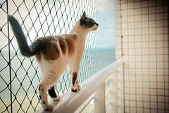 Lily Ppa (dana.) Tags: cute cat lily gata