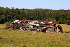 Ruins of Silverfern 2004 - Former Home of Sydney Garden and Ina Inez Wright - Wrights Lane Dyers Crossing, NSW 23rd Feb 2009 (Black Diamond Images) Tags: ruins australia nsw oldbuilding ruraldecay silverfern midnorthcoast nabiac greatlakeshistory wrightslane 23rdfeb2009 historicgreatlakes sidneygardenwright dyerscrossing historicnabiac vision:beach=069 inainezwright