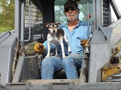 Morris gets a ride (Mulewings~) Tags: dog pet fun farm rich riding hubby morris justforfun skidsteer