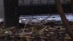 Northen Waterthrush (surfbird917) Tags: city ny newyork bird fall midtown late migration northern warbler migrant waterthrush
