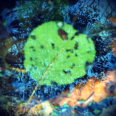 Subsurface (the tomographer) Tags: shadow lake reflection water forest see leaf wasser laub blatt wald schatten foiliage heuchelberg schwaigern siegelung lochsee