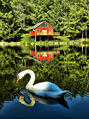 cabin in the woods (RahulSharma) Tags: red horse usa sun lake water colors clouds america river shoe duck amazing swan cabin woods hare heaven paradise bend little indian awesome towers jungle rays om spiritual krishna hue aum vrindavan iskon radhe