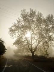 Foggy morning (VillaRhapsody) Tags: street morning autumn sun mist tree fog rural dawn foggy bigmomma challengeyouwinner