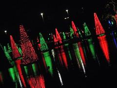 SeaWorld Orlando's Sea of Trees 2/2