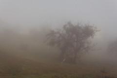 IMG_7363.jpg (sebmayor) Tags: autumn tree nature fog schweiz switzerland suisse ethereal mysterious wallis brouillard valais ayent