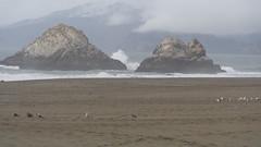 (sftrajan) Tags: sanfrancisco pacificocean landsend oceanbeach marincounty sealrocks sealrock pointlobis