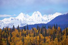 Fall in the Alaska Range (Critter Seeker) Tags: autumn fall nature alaska canon landscape outdoors fallcolor natural fallcolors autumncolors denali denalistatepark 5dmarkii canon5dmarkii