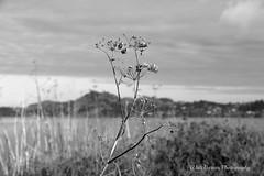 At Miller Knox Reg Park_004 (Walt Barnes) Tags: bw nature water canon eos blackwhite scenery wildlife richmond calif 60d millerknox canoneos60d eos60d ebparksok wdbones99
