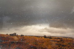 stormy moor (w.y.s.t) Tags: autumn trees sky fall texture nature clouds landscape mood hiking herbst natur himmel wolken windy stormy moor landschaft plain wandern stimmung belgien hohesvenn ebene hochmoor traveldestination pfeifengras flick2