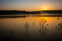 Morning has broken III (Flavio~) Tags: negev pura lonelytree ruhama surnrise rehovotphotographyclub israeltal