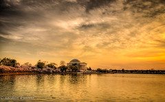 TJ in the Golden Hour (skumar0108) Tags: sunset usa water clouds cherry golden duck dc washington spring memorial moody cloudy dusk thomas blossoms basin april cherryblossoms jefferson blooms tidal hdr tj jeffersonmemorial thomasjefferson goldenhour tidalbasin springseason thomasjeffersonmemorial thegoldenhour 2013