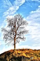 Lone Tree (Lauren Fergus) Tags: tree lone laurenfergus