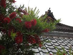 神社の屋根