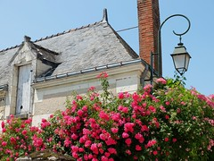 Rosiers  Chdigny (lampadaire) (xavnco2) Tags: roses house france casa village streetlamp centre fleuri lampadaire lampione touraine indreetloire rosiers chdigny maaison