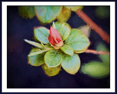 Azalea-to-Be (gtncats) Tags: pink plant abstract flower nature outside azaleas border frame impressionism aoi ef70300mm canon70d photographyforrecreation infinitexposure topazlabsimpression