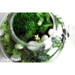 รีวิวสวนในกาของคุณ Fari ครับ ครั้งแรกเลย เพื่อนๆคิดว่าไงบ้างครับ ขอบคุณภาพรีวิวสวยๆครับ ดูรีวิวที่ 👉#tinyworldreview👈 #สวนขวด #สวนในขวด #สวน #สวนขวดโหล #hipster #moss #mosses #terrarium #terrariums #plant #green #nature #natural #