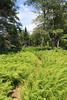 Path Through Ferns, Turtle Head (Erica Robyn) Tags: maine islesboro islesboromaine fern ferns turtle head