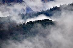 Cloud Nine! (_Amritash_) Tags: cloudnine clouds cloudscape rainclouds movingclouds westerndisturbance forest himalayanforest munsyari nandadevitemple trees greens winter landscape weather ecstatic travel travelinhimalayas himalayas himalayanlandscape incrediblehimalayas uttarakhand kumaon devbhoomi