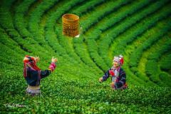 Slow Life -4 (Chula Amorn) Tags: asia sony alpha a7rii a7rm2 hill tribe hilltribe thai thailand