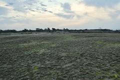 Kootwijkerzand (polletjes) Tags: veluwe kootwijk kootwijkerzand natuur nature nederland netherlands wolken clouds mos groen green vlakte leegte minimalisme minimalism landschap landscape