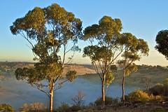 Morning Mist in the Valley Bulla.. (maginoz1) Tags: autumn mist victoria valley gumtree bulla 2013