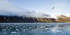 Brash ice in Mak Bay (Russell Scott Images) Tags: novaya zemlya russian arctic bukhta maka near lednik brown glacier russellscottimages