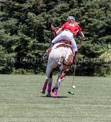 #4 back view_ (Sue Quinn©Photography) Tags: 3 ottawa aug polo invitational 2013 ellisdon